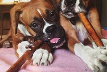 Best Boxer Pictures / The best photos of boxer dogs around.