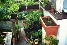 Zahradka na balkone
