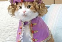 Halloween Pet Fun & Safety / Seasonal treats, costumes, and safety for your pets.