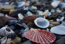 kagylók és kövek