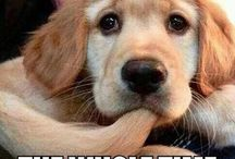 Precious Pet Pics & Humor / Funny and adorable pet pictures! / by Angie Gaffke