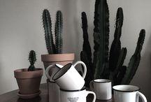 Green Spirit / Plante, cactus