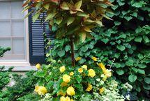 composition fleurale en pot