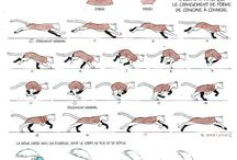 Animation - animals