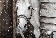 Tél |Winter / #winter #tél #wintermagic #hó #havazás #snow