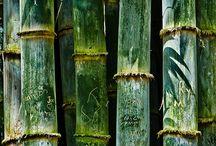 Eucalyptur, bamboo & green tea