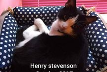 Cat  Lover / My adorable cat Henry