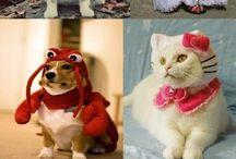 Przebrane zwierzaki / Animals in disguises