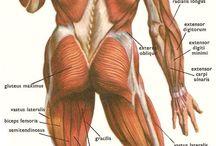 svaly celého těla zadní