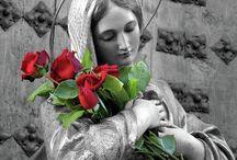 Preciosas ROSAASSSS...  Me encantan astromelias, orquídeas, tulipanes, y más. / ROSSAAAASSSSS