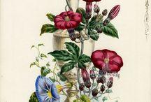 ботаника / рисунки растений