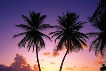 palm t