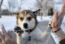Chien / Des chiens, encore des chiens, toujours des chiens.