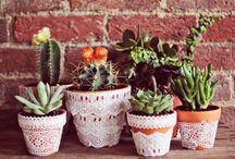Suculentas / Inspirações de vasos e terrários com suculentas para decorar sua casa e jardim