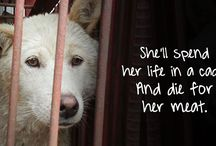 Save the dogs, Don't kill!! Don't Breed!!❤️ / They have Only us humans to count on, Loving people without wanting money  I'm sharing, as I live here in Sweden.... Breakens my heart every day seeing so much pain and suffering in their eyes, Help me help them!!! ❤️❤️❤️