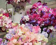 Bijzondere bloemen / Mooie aparte bloemen