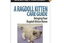 Ragdoll Cat Books