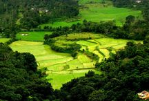 Coorg Bliss / Nature's Bliss from the land of Coorg