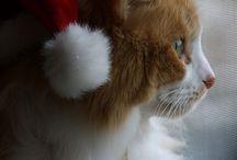 2014 Christmas Joy