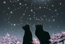 gato lua
