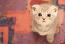 Much Cute, Very Fluffy