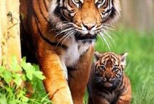 Awesome pictures :D / Cool photos- animals, landscapes etc.