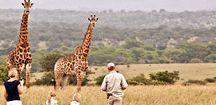 Safari / 1 safari in Afrika