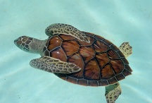 Turtles!!! / by Molly Pearcy