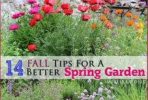 Spring gardens / #spring #springgardens #flowers #gardens