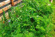 Eatable garden