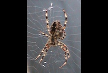 Science & Nature / Spider on web / by RichardP Productions