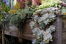 Succulents  / by Becky Sagal