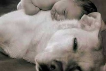 pets / by MANISH SHUKLA