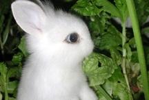 Conejitos/ Rabbits I love/ Bunny