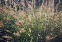 realizacje ogrodów GRAS ogrody
