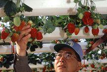 uprawy hydroponiczne