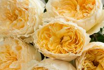 Yellow roses for a golden wedding