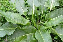 yararlı bitkiler