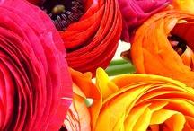 Event Flower Colours & Ideas