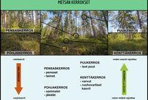Luontotutkimus / Ideoita ja materiaalia luontoretkille