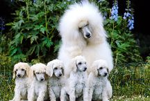 Animali adorabili
