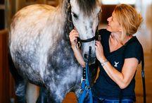 Bodhi Visuals | Horses