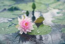 My photos: botanic / botanic photo