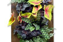 My Gardening Articles