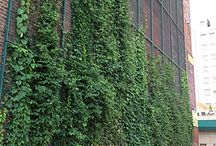 zelene steny
