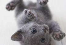 My future kitty