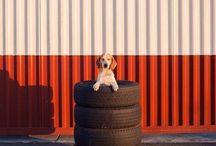 Kutya portrék // Dog portraita