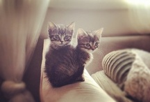 Just Meow / kittens, cats ....purrfection