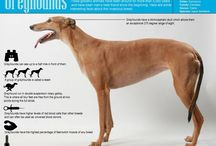 Facts about sighthounds