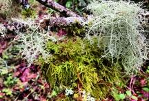 Flora & Fauna / by Laurie Fait